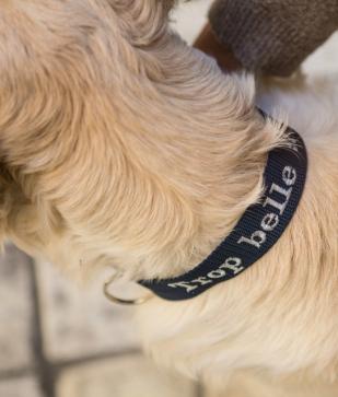 Personnalisation Collier pour chien