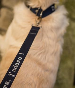 Personnalisation Laisse pour chien